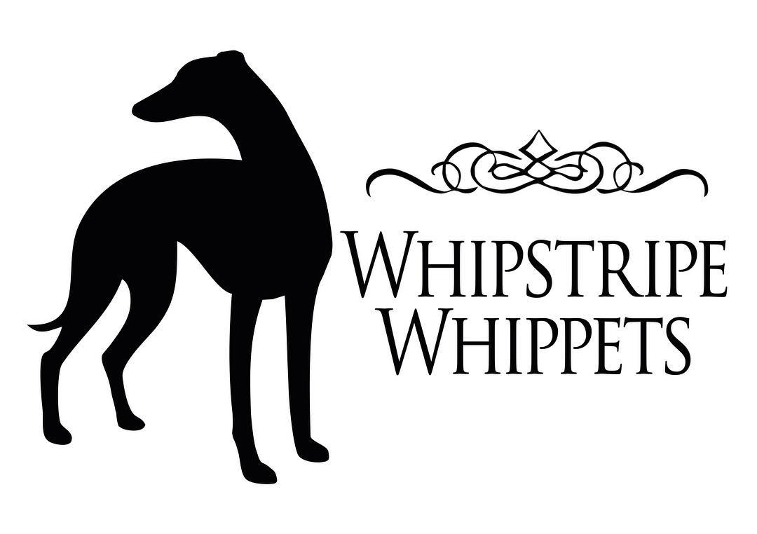 Whipstripe Whippets